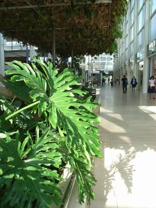 tropical plants flourish in the south arcade