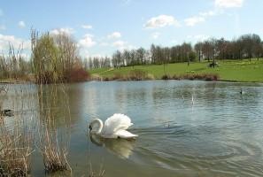 Spring in Campbell Park, Central Milton Keynes (c) Linda Inoki