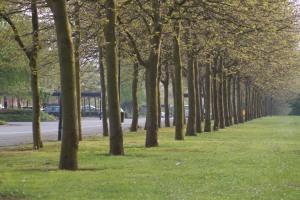 CMK's distinctive boulevards