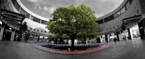 The famous Midsummer Oak in 2007 (c) Boyd & Evans